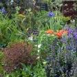 Masterton front garden